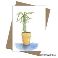 C1305 Madagascar Palm