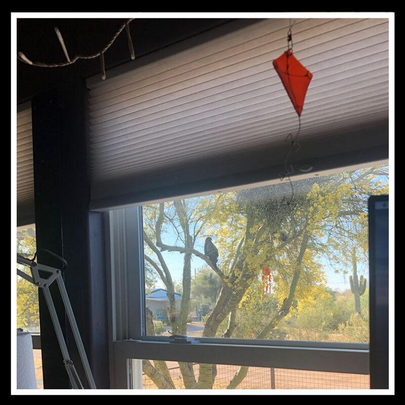 hawk in window