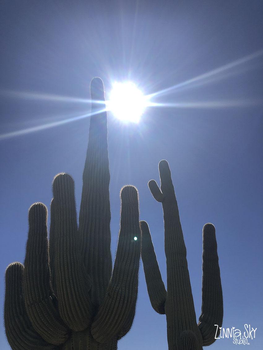 blazing sun over saguaro cactus