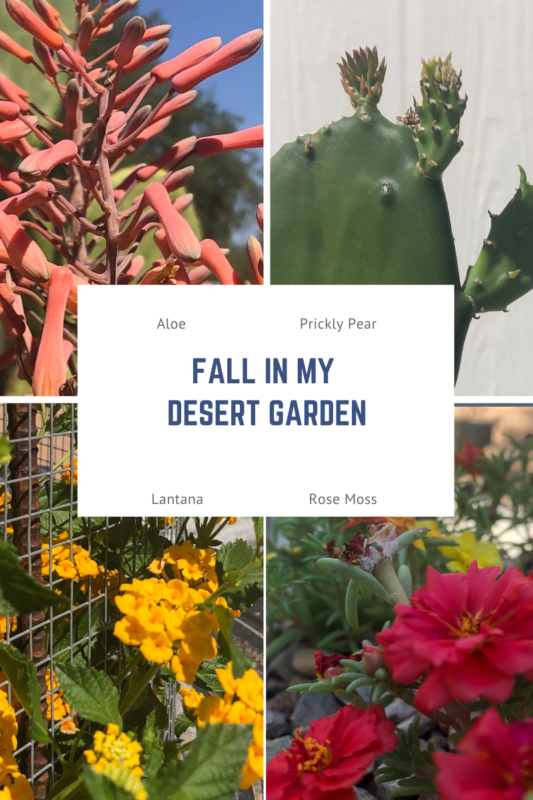fall in my desert garden