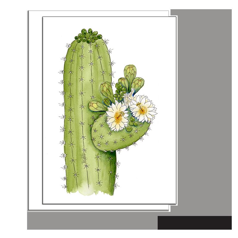 saguaro cactus flowers buds