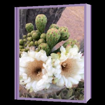 saguaro flowers + buds